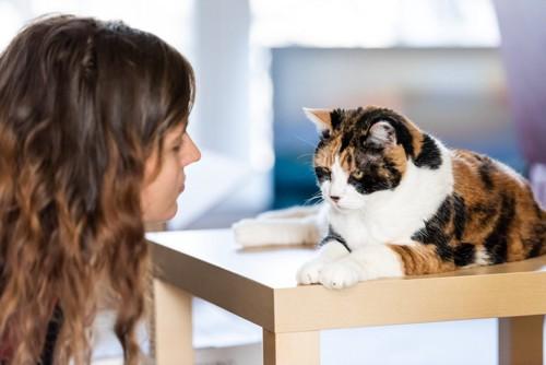 叱る人と叱られる猫