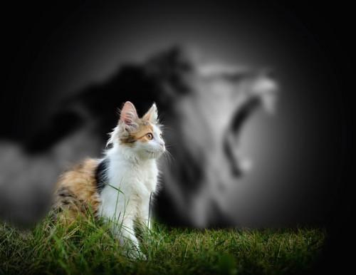 ライオンの影をした凛々しい猫