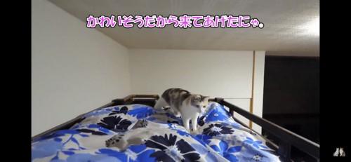 布団に乗ってくる猫