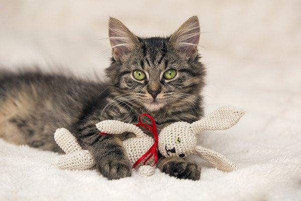 ウサギのぬいぐるみを抱き締めたまま見つめる猫