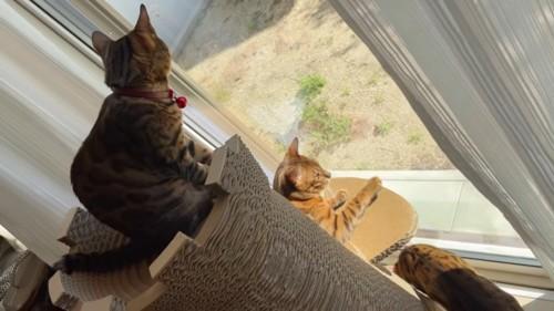 塔の上に乗る猫と下の段にいる猫