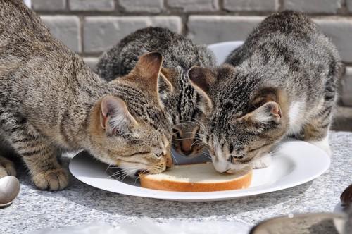 パンを食べる3匹の猫