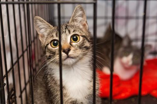 譲渡会に参加する猫達