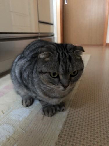 むすっとする猫