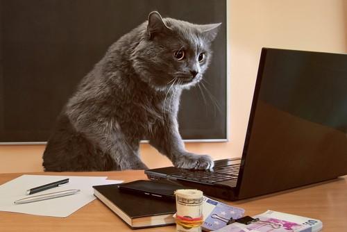 パソコンに向かい予約する猫