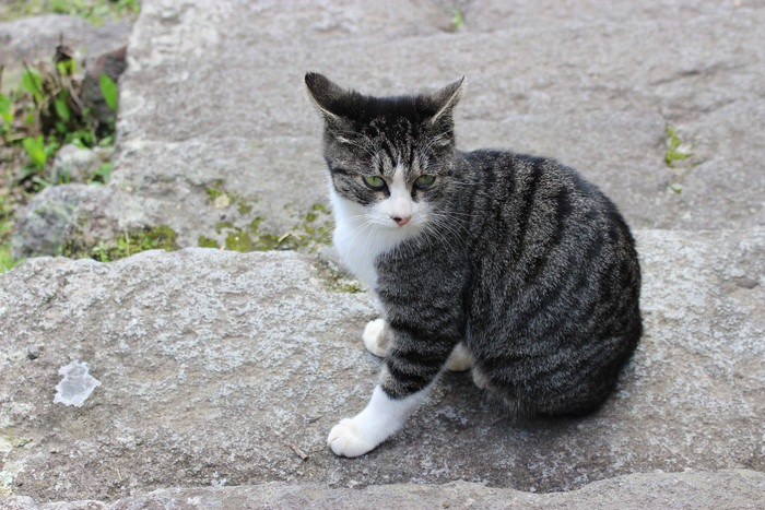 黒っぽい靴下猫