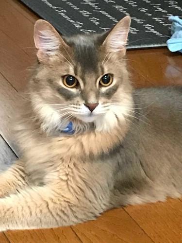 何かをじーっと見つめる猫