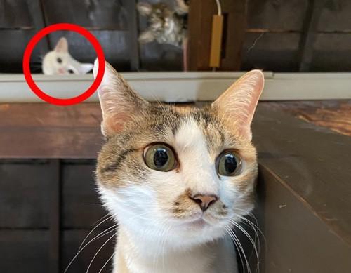 猫の背後霊写真2