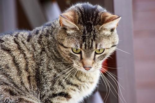 我慢している猫
