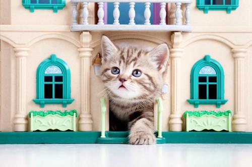 おもちゃの家から顔を出す猫