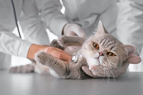 病院で聴診器を当てられる猫