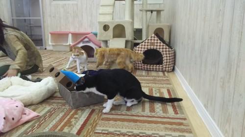 おもちゃに夢中な猫スタッフ