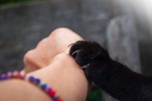 人間の腕を引っ掻いている猫