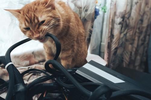 電気コードに噛み付く猫