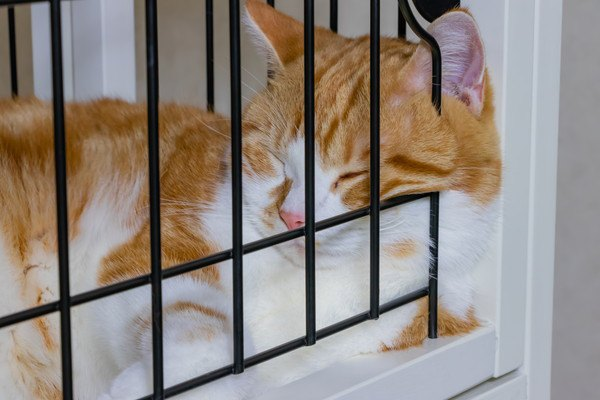 ケージの中でマッタリする茶白ネコ