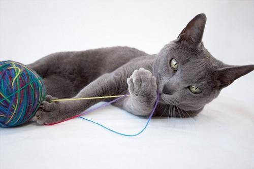 毛糸玉とグレーの猫