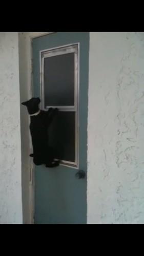 窓の前に座る猫