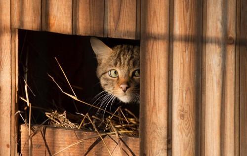 ワイヤーケージ内の三毛猫