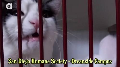 バーンキャットプログラムで里子に出る猫