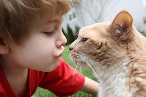 子供に鼻チューする猫