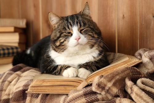 本を広げて眠そうな表情の猫