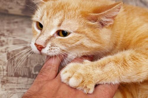 飼い主の手を噛む茶トラ猫