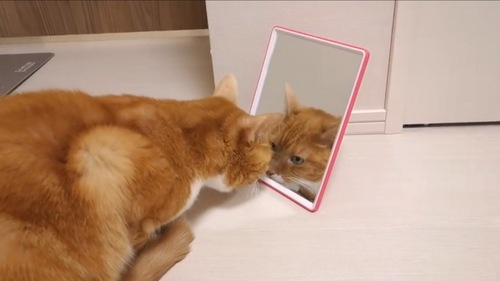 鏡をみるちゃいちゃん