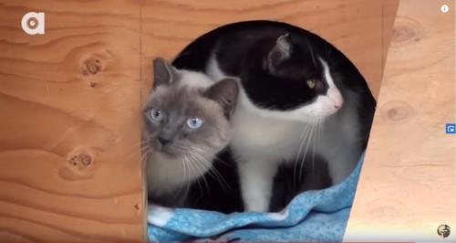 箱から覗く2匹の猫