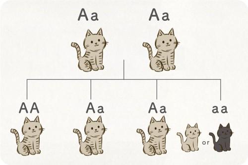 猫のアグーチ遺伝子
