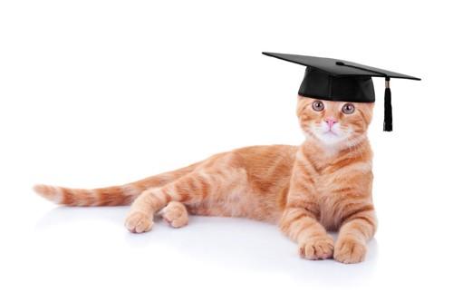 graduate capをかぶる猫