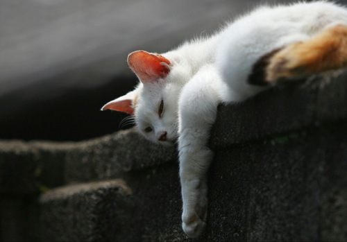前足をだらんとして寝ている猫