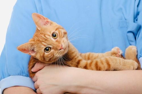 獣医さんに抱っこされる猫