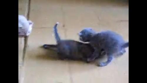 猫の間を通る猫