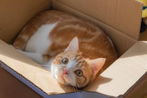 箱の中に入ってリラックスする猫