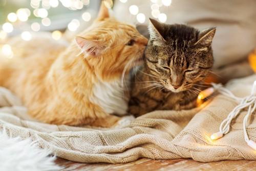 猫のアログルーミング