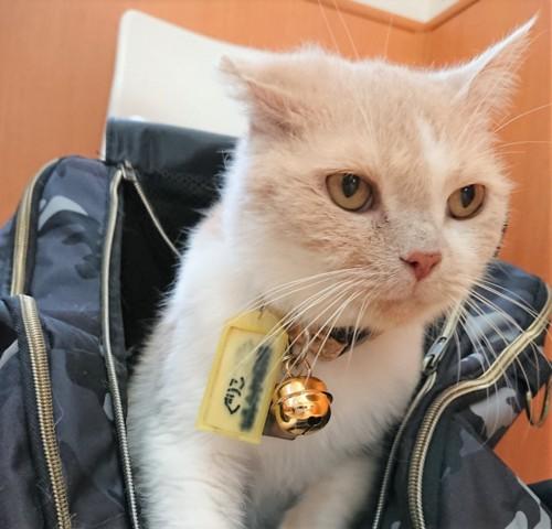病院の待合室にいる猫