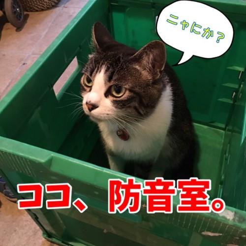 防音と言い張る猫