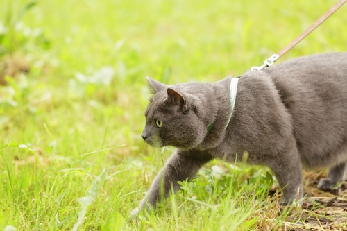 散歩をする猫
