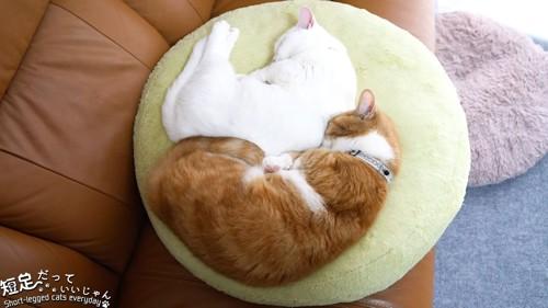 クッションで寝る白猫と茶白猫