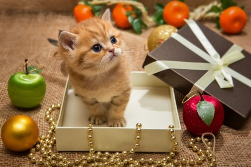 箱に入った子猫