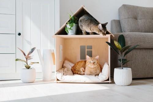 ハウスに入る2匹の猫