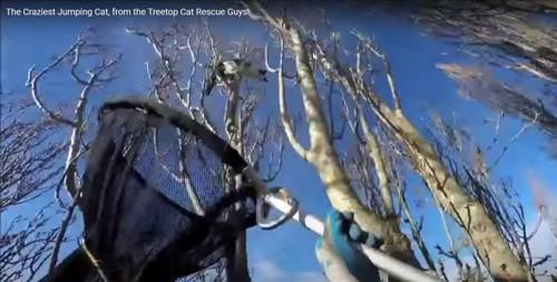 猫に網を伸ばす