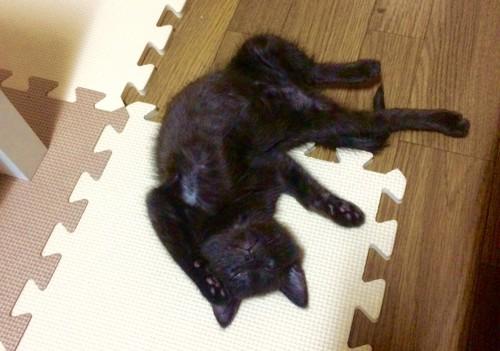 すごい寝方の猫