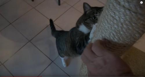 スクラッチする猫
