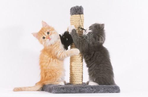 ポール型の猫の爪とぎと二匹の子猫