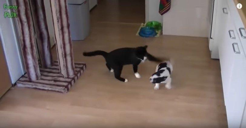 遊ぶ猫と犬