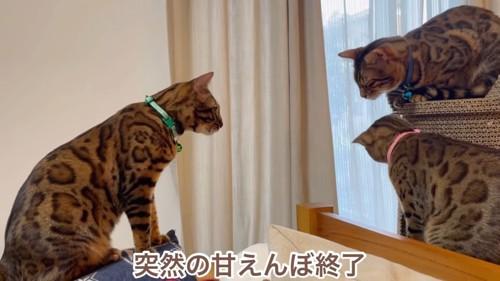 座る緑色の首輪の猫