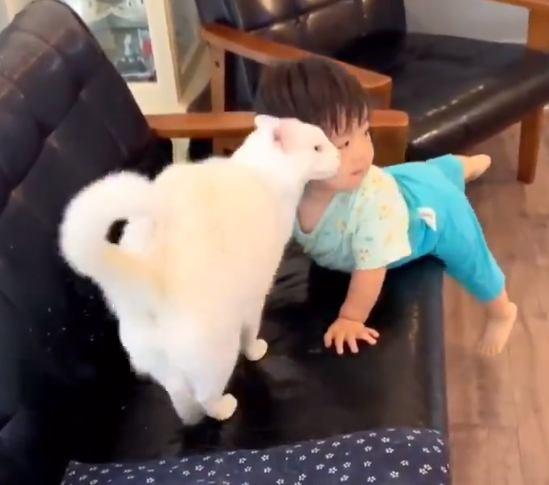 ソファに上った男の子と猫