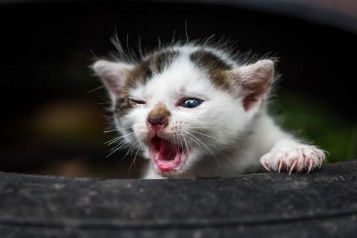 捨てられた子猫