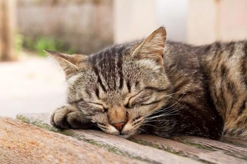 寝そべる猫